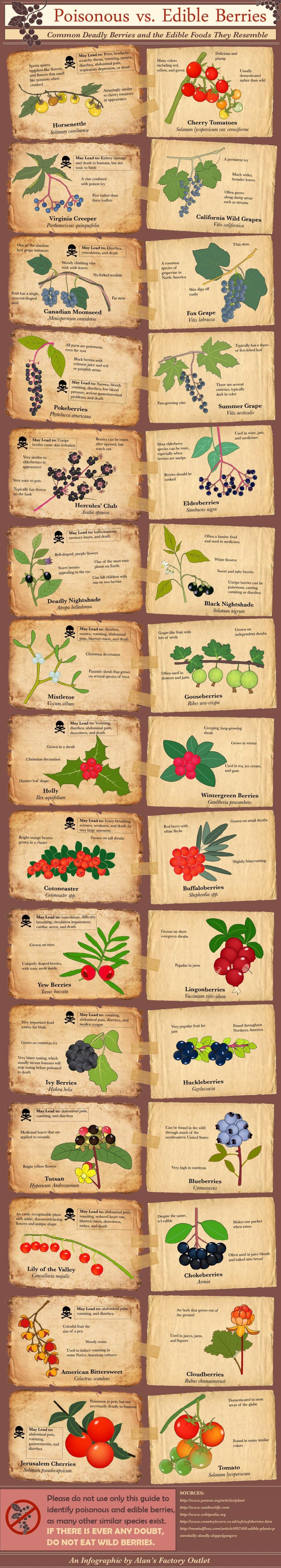 Infographic-poisonous-berries-food-fruit-vegetable-garden-forage-1
