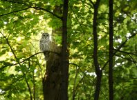 How God uses Life to Empower Your Focus owl in a tree looking down at you
